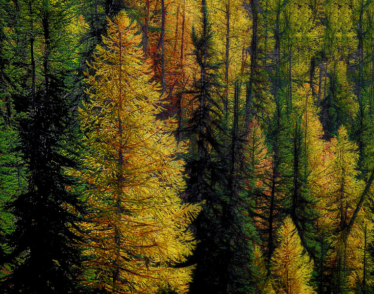 The Spirit of the Larch Trees