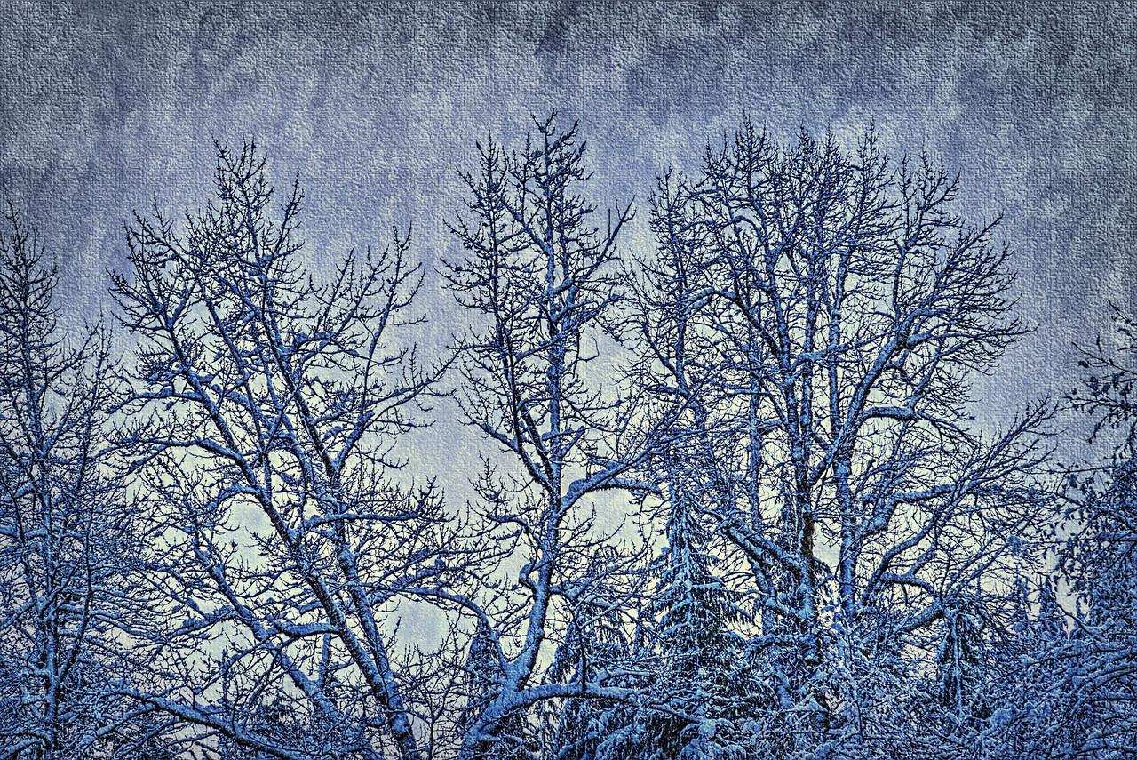 Treescape of Winter