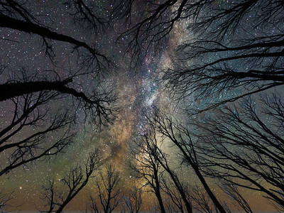 Galaxy Tree Cathedral
