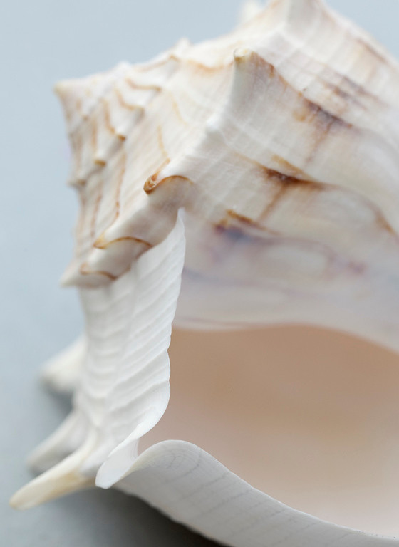 Shell 11