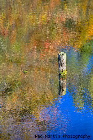 Pond in Western Albemarle County, Virginia