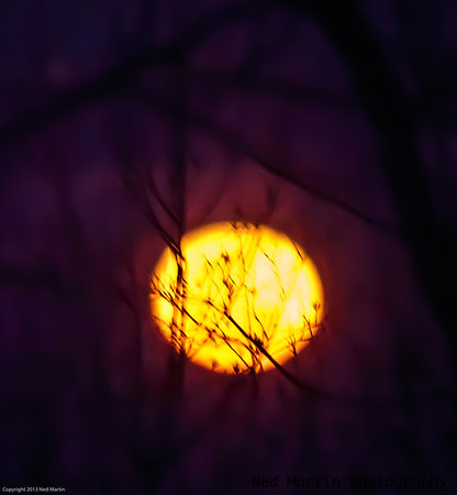 Moon behind the trees.