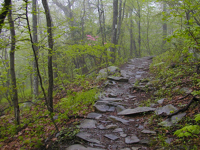 Appalachian Trail between Lewis Mountain and Hazeltop Mountain in Shenandoah National Park