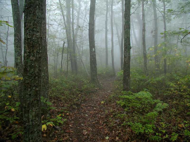Fog in the James River Wilderness