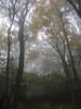 Appalachian Trail near Skyland, Shenandoah National park