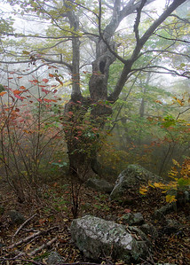 Appalachian Trail near Skyland, Shenandoah National park