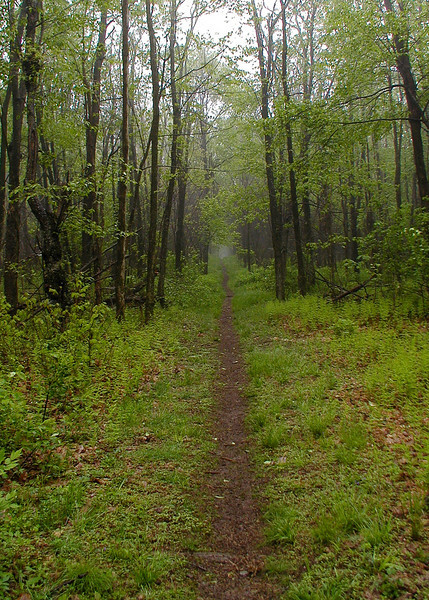 Appalachian Trail near Big Meadows, Shenandoah National Park