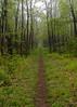 Appalachian Trail near Big Meadows, Shenandoah National Park