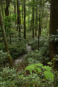 Forest stream along the hike to Grotto Falls in Roaring Fork, Great Smokey Mountains.