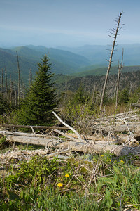 Along the path to Clingman's Dome, Great Smokey Mountains National Park