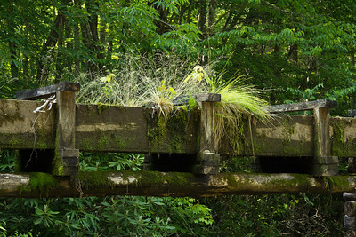 The somewhat overgrown sluice for Mingus Mill along the Newfound Gap Road, in Great Smokey Mountains National Park