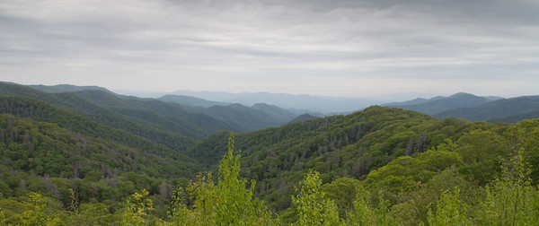 View along the Newfound Gap Rd. in Great Smokey Mountains National Park.