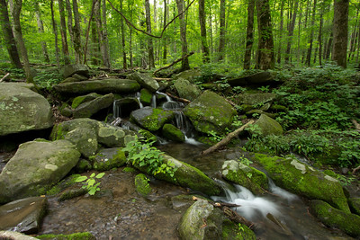 Stream along Newfound Gap Rd. in the Smokies