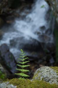 Near Grotto Falls in Roaring Fork