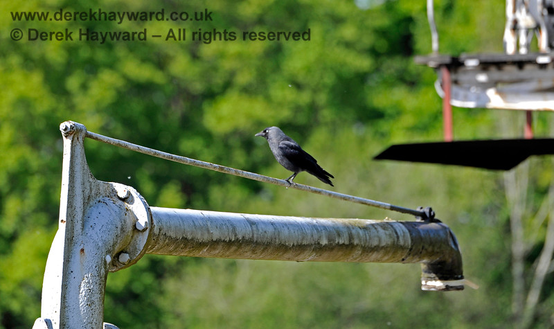 A Jackdaw finds a handy perch on the water crane at Horsted Keynes. 14.05.2017 15297