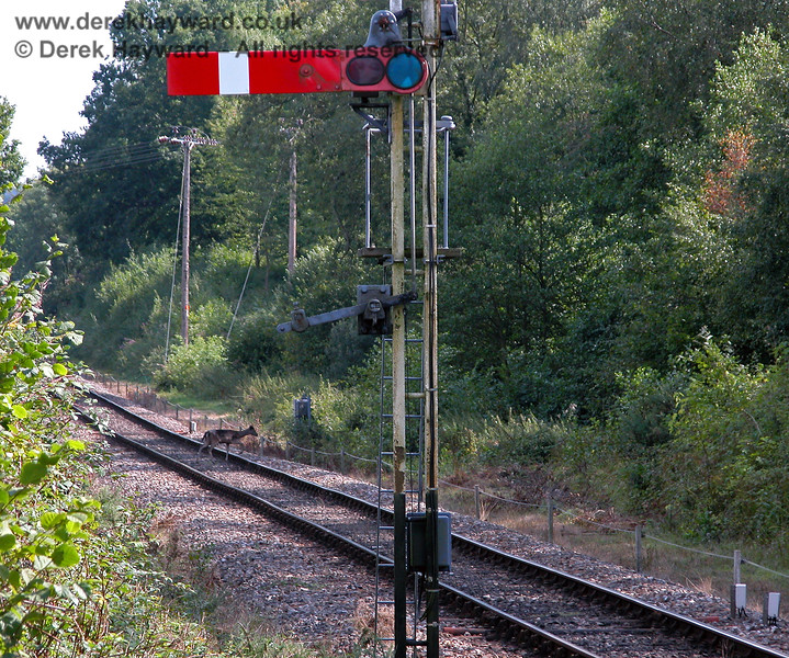 Having checked that the signal is at danger a deer crosses the line at Kingscote. 27.08.2006