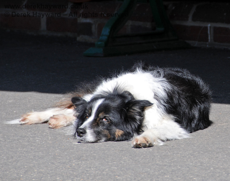 It's SO BORING when your Mum and Dad are working on the platform. Meg chills out at Kingscote. 17.04.2010