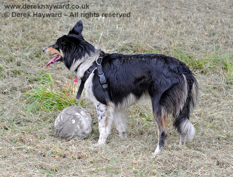 The Vintage Transport Weekend can be very boring unless you have brought your ball... 10.08.2013 7796