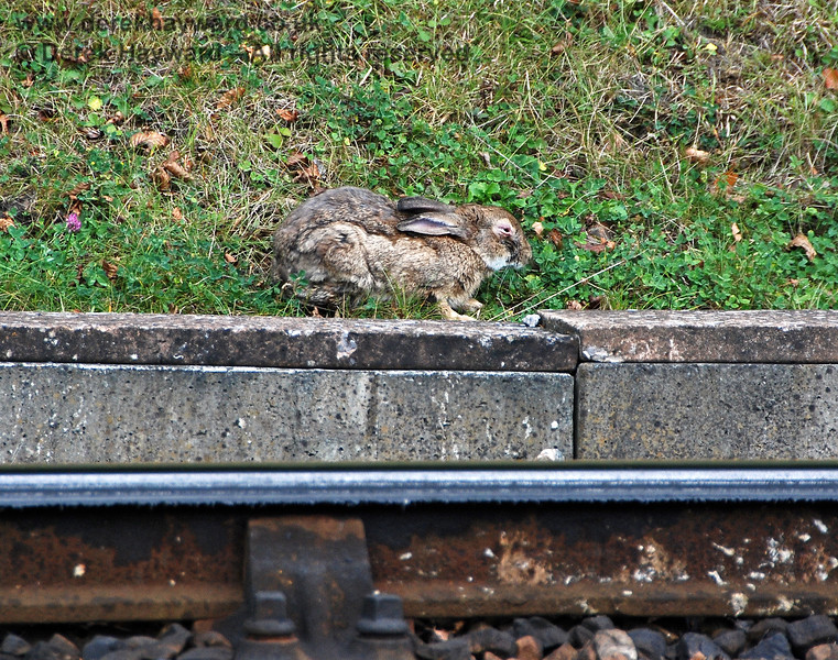 Never mind the trains; Leamland Bridge is a nice place for a snooze. 23.09.2007