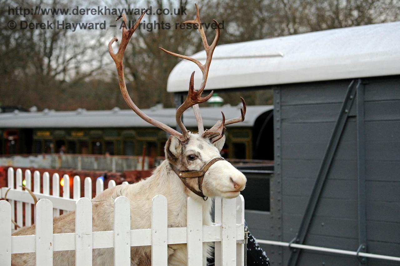 Reindeer KC 111216 14671 E