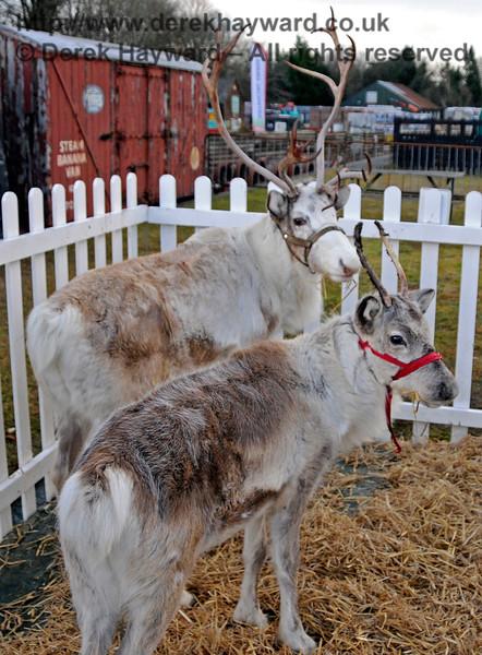 Reindeer KC 111216 16773 E