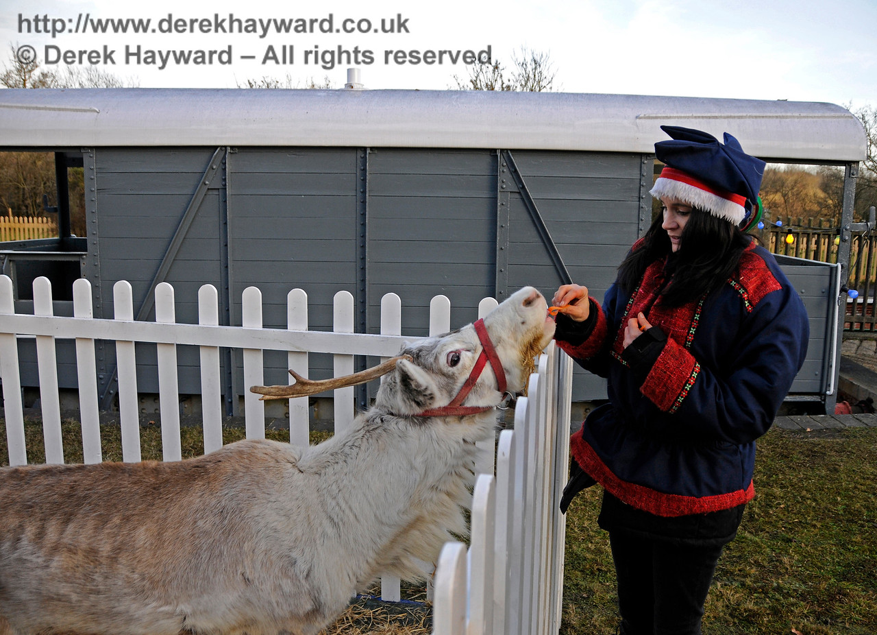 Reindeers love attractive women... especially if they have carrots. Kingscote 11.12.2016 16764