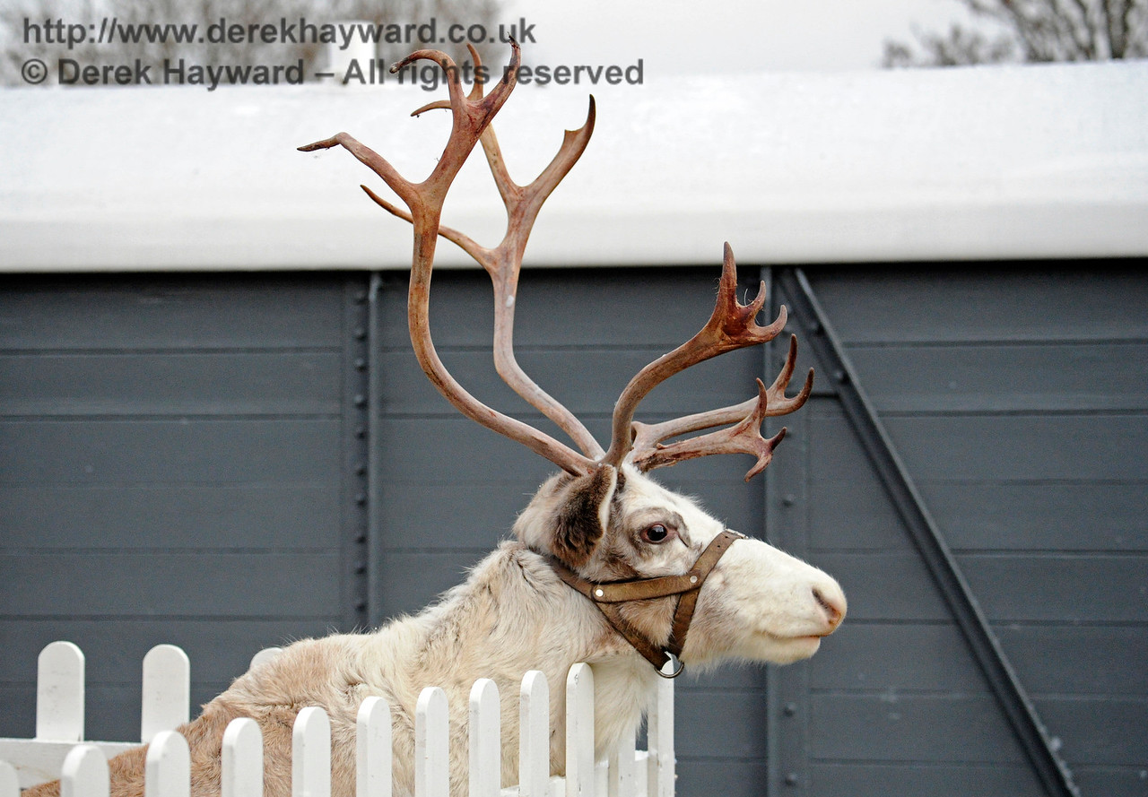 Reindeer KC 111216 14666 E