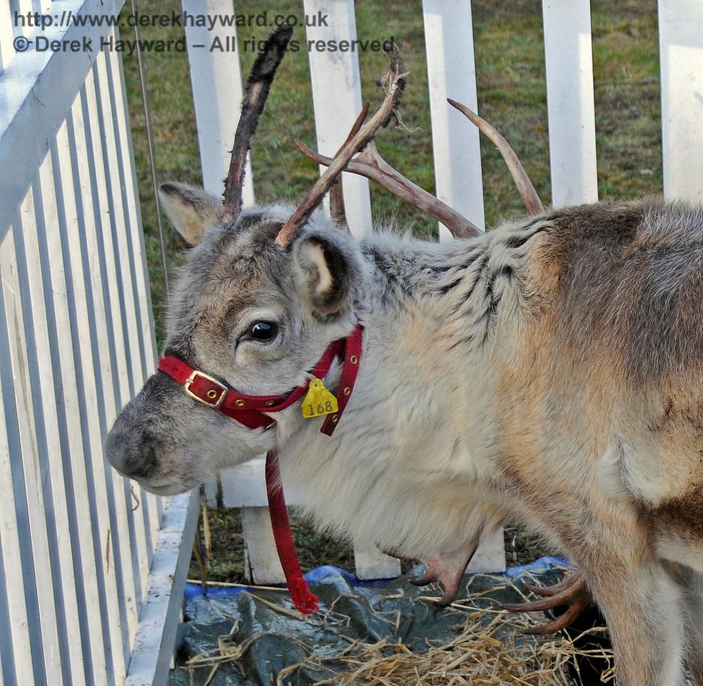 Reindeer KC 111216 16761 E