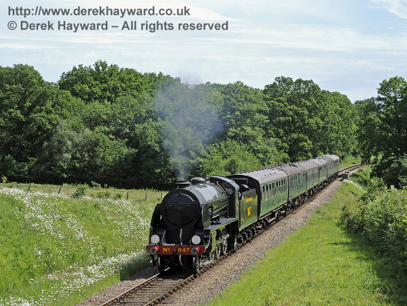 847 passes a display of daisies at Medhurst Farm.  08.06.2014  9541
