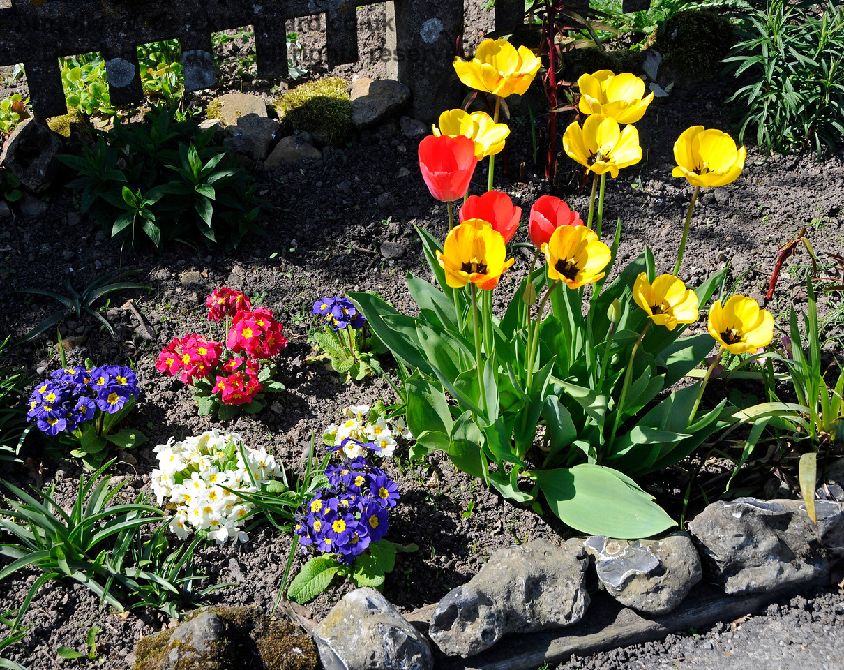 Spring Flowers at Kingscote. 09.04.2017 17091