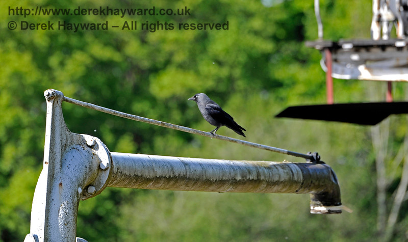 A jackdaw keeps watch over a crowded Horsted Keynes from an unusual perch. 14.05.2017 15297