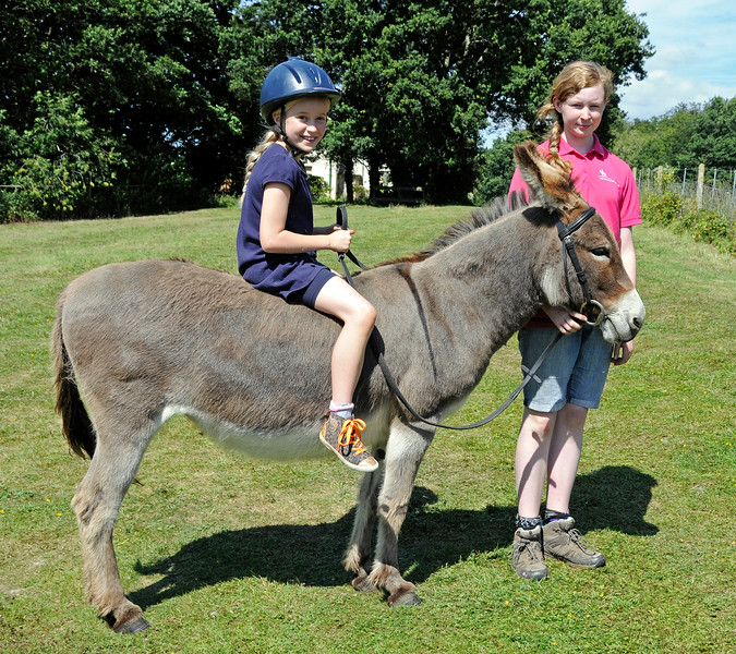 Donkey rides were available for younger visitors.  Horsted Keynes  01.08.2015  13397