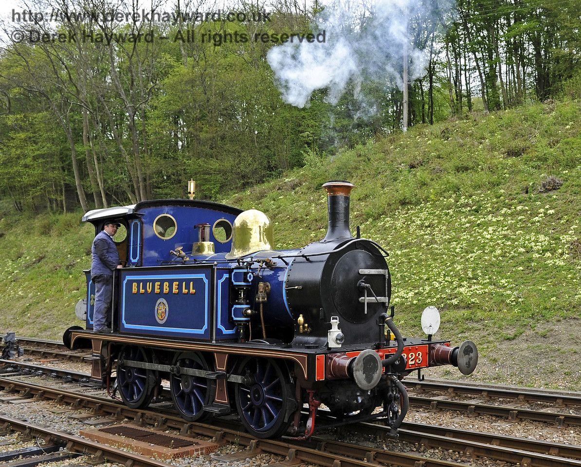 323 Bluebell poses with the primroses at Horsted Keynes.  16.04.2011  0854