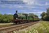 592 amongst the daisies at Kingscote.  08.06.2014  10644