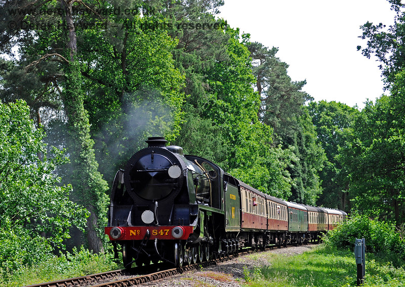 847 runs through the fir trees on the approach to Birch Farm foot crossing. 11.06.2017 15556