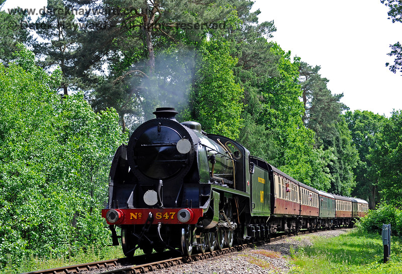 847 runs through the fir trees on the approach to Birch Farm foot crossing. 11.06.2017 15558
