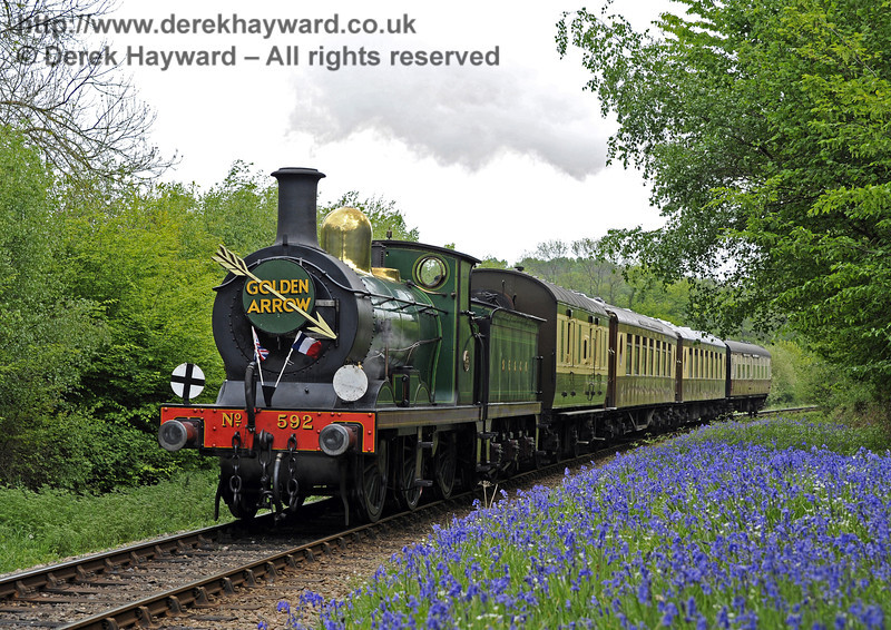 592 passes a display of bluebells near Lindfield Wood whilst hauling the Golden Arrow.  28.04.2011  0970