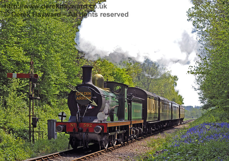 The bluebells are in bloom as 592 steams past Ketches Halt with the Golden Arrow.  28.04.2011  0939