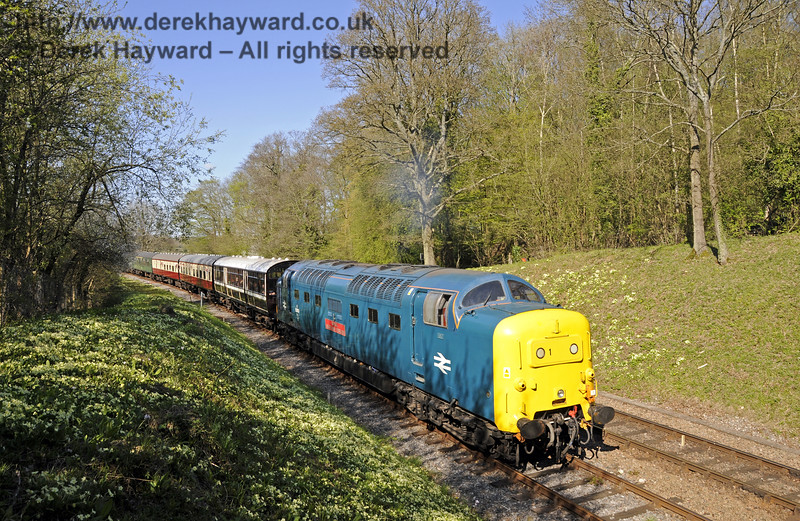 55019 Royal Highland Fusilier passes the primroses at Leamland Bridge.  18.04.2015  12285