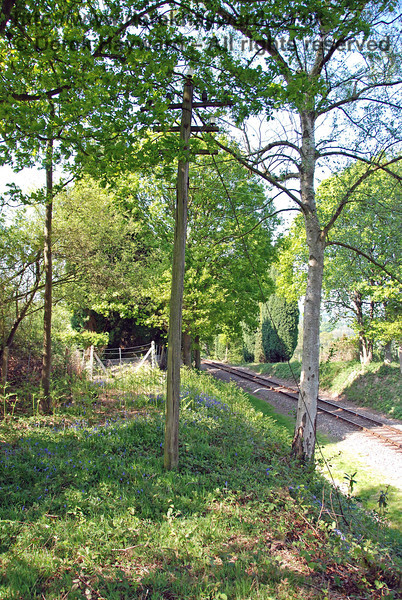 A relic of the BR line.  A telegraph pole hidden in the trees near Dean's Crossing.
