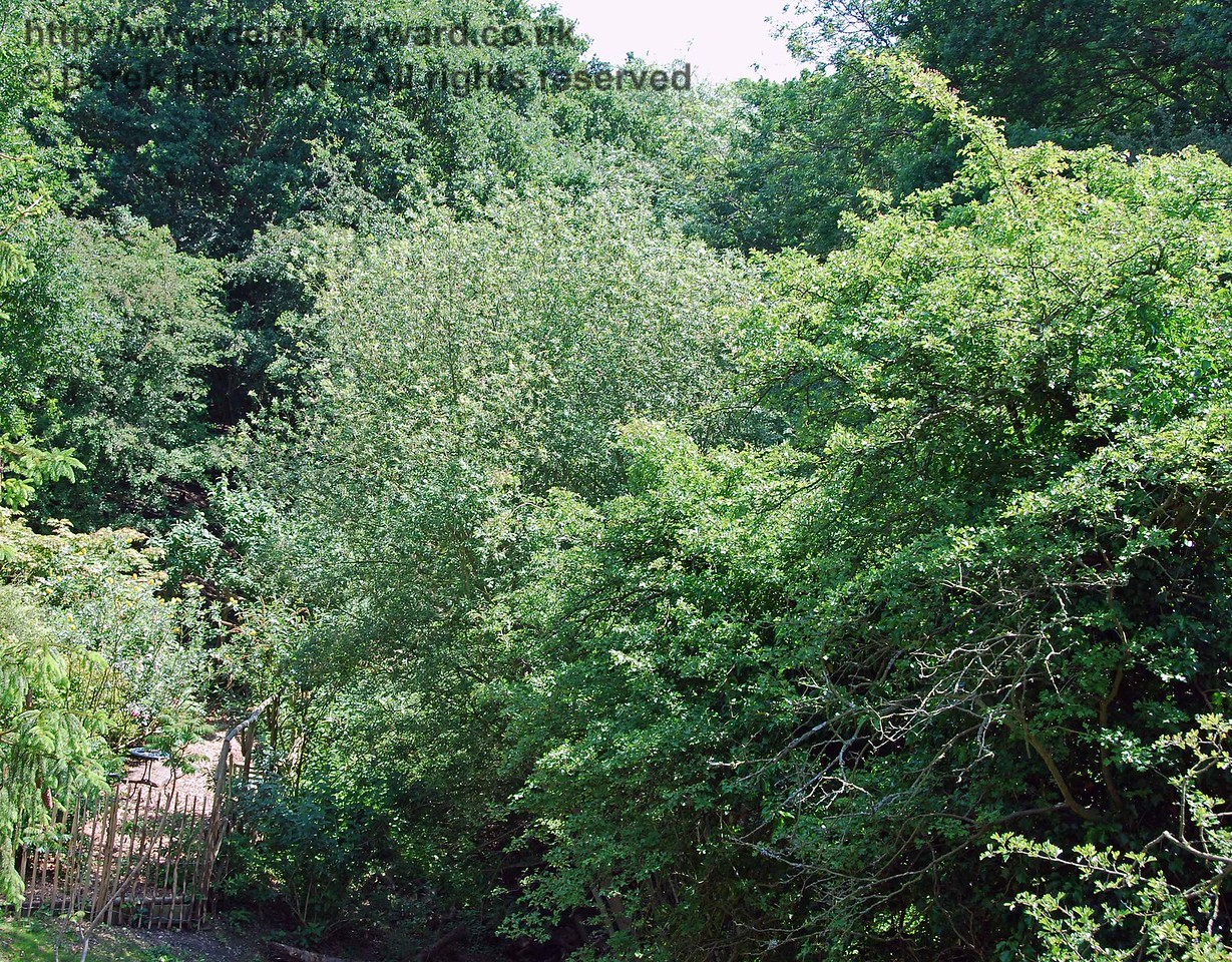 The southern cutting approaching the bridge is heavily overgrown and not accessible.  The gap in the trees at the top of the photo marks the line of the route.  02.06.2007