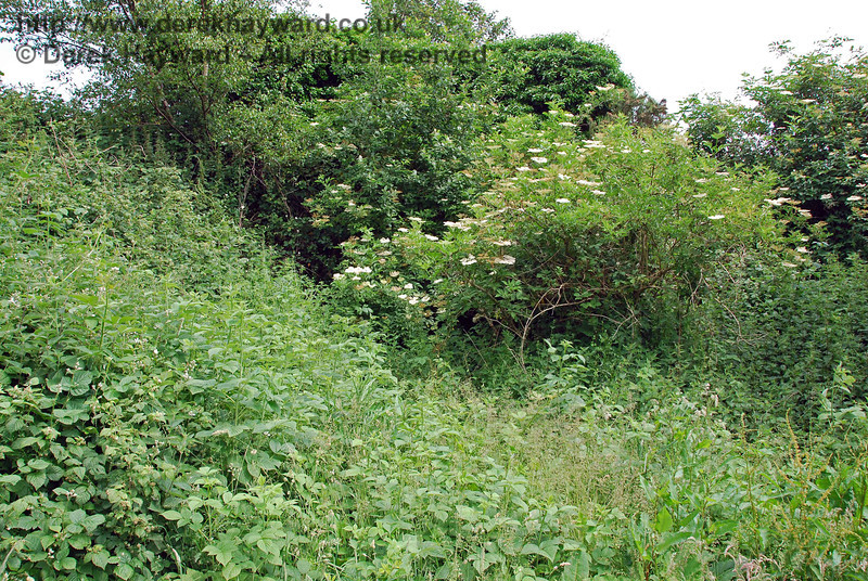 Believe it or not there is a bridge under there.  This is what a disused cattle creep looks like when over 50 years of vegetation has been allowed to grow under the bridge.  I concluded that the path was no longer used....