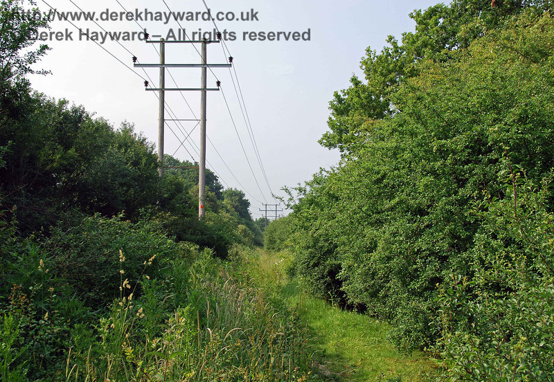 A view within the trees looking north along the old trackbed, with the power lines above.  Heavy undergrowth prevented direct progress north after a short distance.