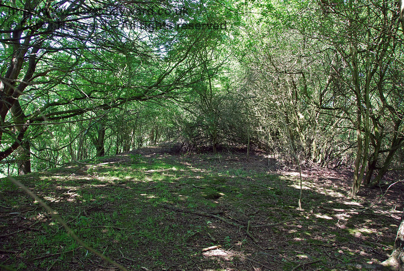 Entering the wood, after about 20 metres the embankment is revealed and it is quite clear of vegetation for a short distance.  This view looks north.