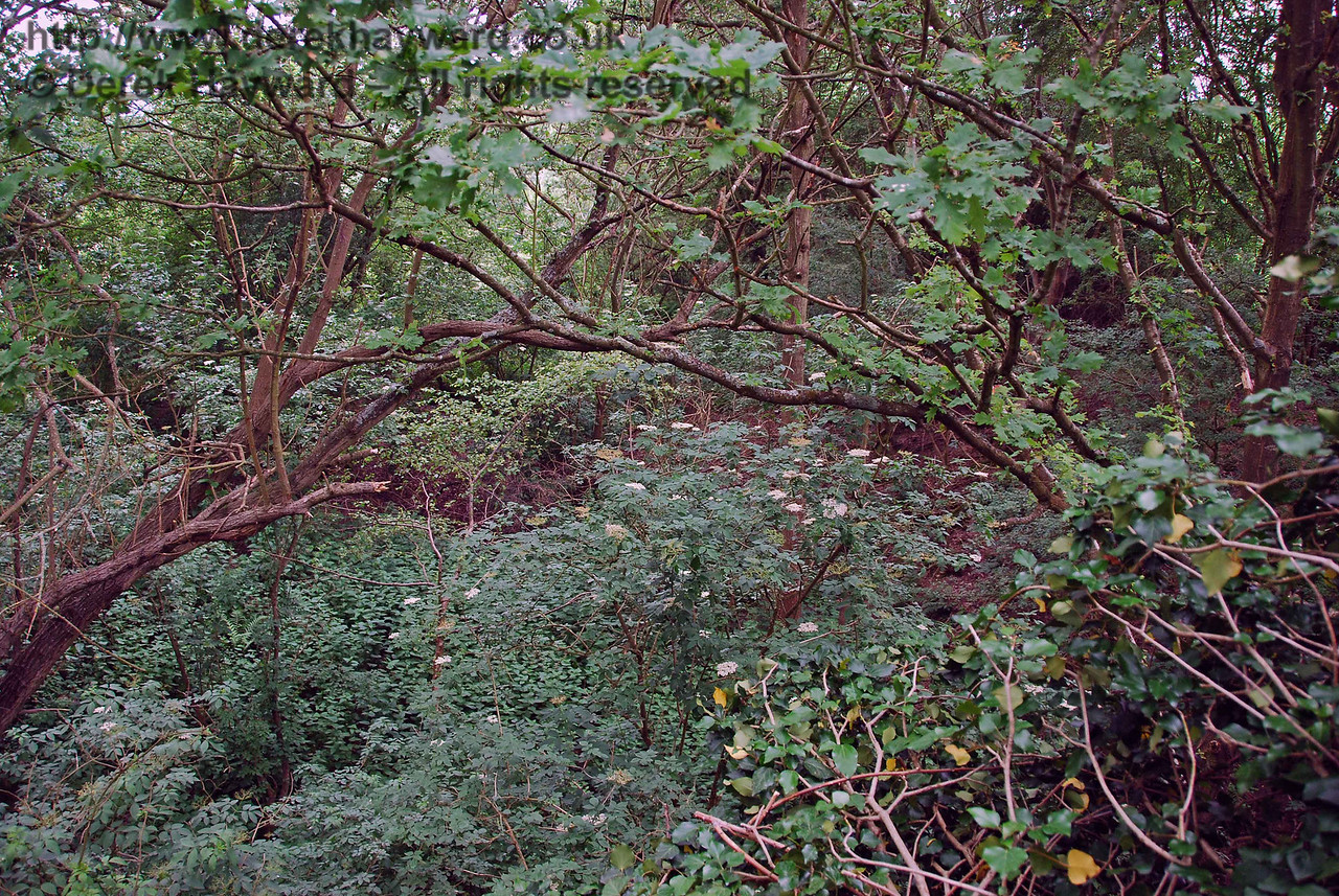 This view looks north along the cutting from the top of the bridge.  A shot to the south was impossible owing to undergrowth.
