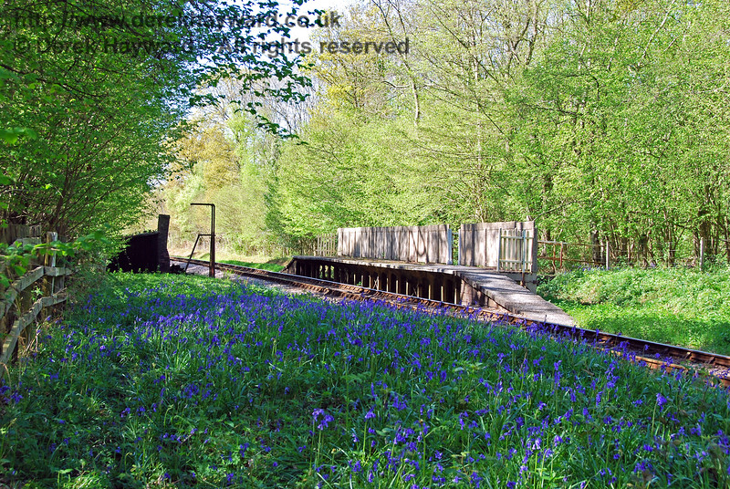 Another shot of Ketches Halt, looking north at the height of the Bluebell season. 26.04.2009