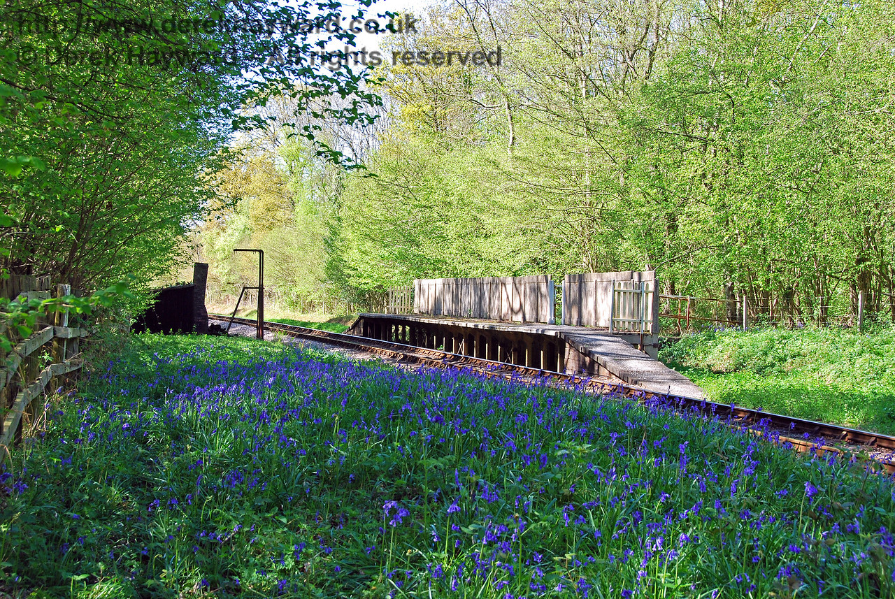 Ketches Halt, looking north at the height of the Bluebell season. 26.04.2009