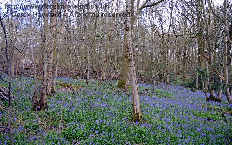 Just north of Monteswood Lane Bridge, on the eastern side, is a wood which in most years has a very good display of bluebells. 17.04.2016 14878