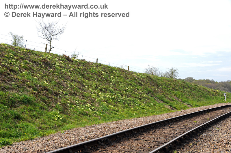 A spring display of primroses on the western embankment as the track curves round to the site of the former Freshfield Halt. 28.04.2010 2077