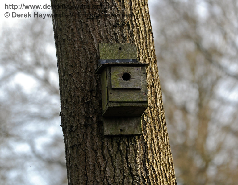 For an unknown reason there are a large number of nest boxes on the lineside near Three Arch Bridge. 24.02.2011 0184